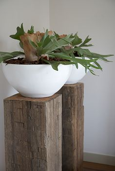 kitchen ideas – New Ideas Indoor Plant Pots, Potted Plants, Fern Houseplant, Garden Art, Home And Garden, Platycerium, Staghorn Fern, Photo Wall Decor, Decoration Plante