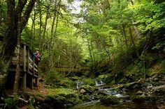 Dickson Falls trail