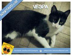Vespa, ex George, adoptado! Si, gracias a Ignacio!Él estaba viviendo solo y su vida no era completa... hasta que conoció a Vespa! Ahora juntos son felices... !!! Gracias Ignacio por adoptar a Vespa!!!