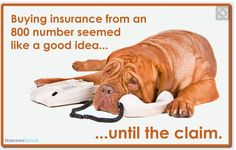 Guess how much experience do call-center reps have with insurance claims? Buying insurance online may seem convenient at the time of purchase, but it's when you NEED it the most that a local agent's service is invaluable. There's no need to choose b Insurance Humor, Home Insurance Quotes, Insurance Marketing, Best Insurance, Insurance Agency, Life Insurance, Insurance License, Insurance Business, Insurance Benefits
