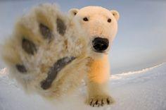 クマの国から                                                                                                                                                      もっと見る