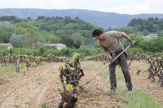 Top #Provence #Luberon vineyard visit