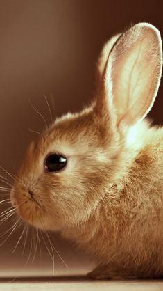 Cute Easter Bunny iPhone 5 Wallpaper