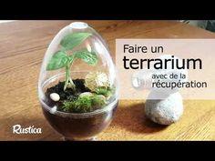 Aquarium Terrarium, Plants, Bricolage