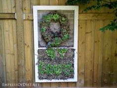 25+ Creative Ideas For Garden Fences | Framed succulents