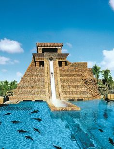 Bucket list: The Atlantis slide in the Bahamas will let you slide under the sharks! This is awesome!: