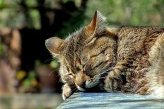 Relaxing into Sleep (no bell at end) This meditation can help us to access a relaxed attentiveness, or alternately, serve as a pathway to ease-filled sleep.