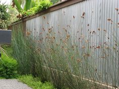 Corrugated steel roofing used as privacy fence. Tall lacy grass softens the factory shed look.