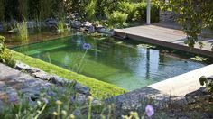 An alternative to chlorine pools, the BioTop Natural Pools use plants to keep water clean and clear: