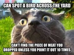 Can spot a bird across the yard. Can't find the piece of meat you dropped unless you point it out 10 times. Yep. Cat problems. Haha