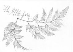 """""""The Little Fern"""" 5x7 original pencil drawing. #cwdrawings #etsy"""