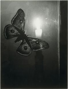 Butterfly with Candle, Brassai, 1933.