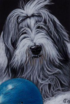 Tags - bearded-collie   Sandrine's Gallery