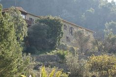 "Historical ""finca"" for sale in Mallorca. Villas & houses, Country Properties, Estates for sale Alaró. Vida Balear"