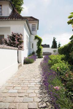 borders of lavender