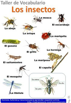 Do you want to study Spanish vocabulary. Learn the name of the insects in Spanish with some word games, and a worksheet to downlod. Spanish Grammar, Spanish Vocabulary, Grammar And Vocabulary, Spanish Language Learning, Teaching Spanish, Study Spanish, Spanish Lessons, English Structure, Words In Other Languages