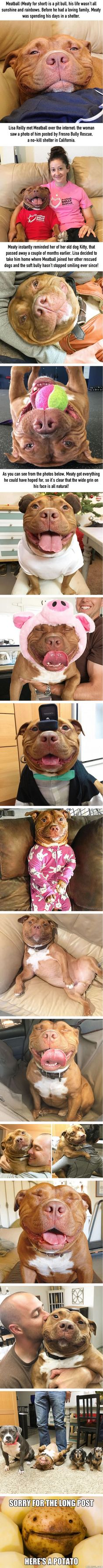 Meet Meaty, The Dog Who Can't Stop Smiling After Being Rescued From A Shelter