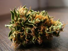 Orange Kush Cannabis Plant, Cannabis Oil, Buy Weed Online, Smoking Weed, Medical Marijuana, Herbalism, Pineapple Kush, Pineapple Express, Seeds