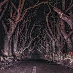 Floresta sombria Irlanda do Norte Art Papillon, Southern Gothic, Chef D Oeuvre, Arte Horror, Northern Ireland, Dark Art, Aesthetic Pictures, Les Oeuvres, Adventure Time