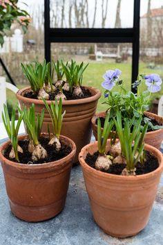 My loving home and garden: En time gør underværker