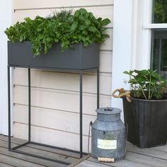 Köksträdgård för icke-odlaren - Välkommen hem