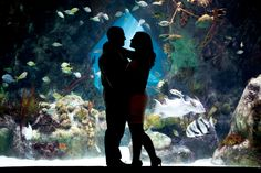 Silhouette. Engagement session in the ABQ BioPark Botanical Gardens and Aquarium. Matt Blasing Photography. Engagement and wedding photographer based in Albuquerque, New Mexico.