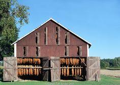 Tobacco barn near the Connecticut River, Sunderland, MA | Al ...