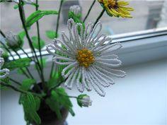 Beaded chrysanthemum