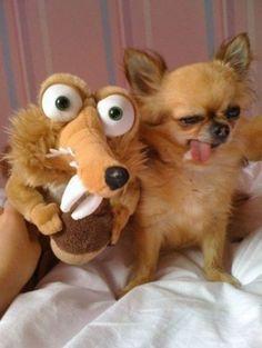 Silly dog! He he