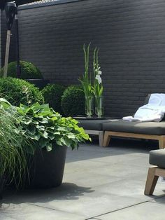 Paint the garage wall black along with the fence and then add some dramatic plants!!!