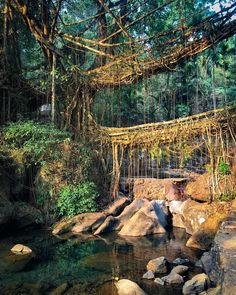 Whenever you feel you've seen the best of nature, you just find something else better to top it. India Trip, India Travel, Tourist Places, Places To Travel, Shillong, Northeast India, Amazing India, Cool Places To Visit, Passport