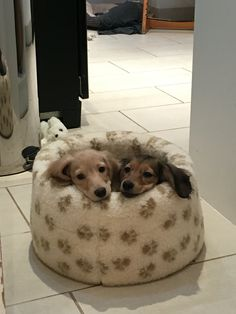 My two pups at 14 weeks