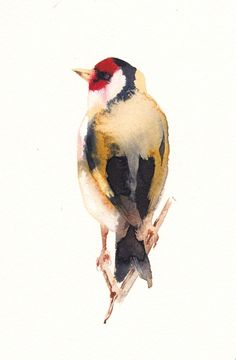 Goldfinch, Giclée print by Kate Osborne   Artfinder Watercolor Cat, Watercolor Animals, Watercolor Paintings, Watercolours, Animal Paintings, Paintings For Sale, Highland Cow Painting, Bird Artwork, Goldfinch