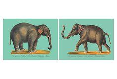 Elephant on OneKingsLane.com