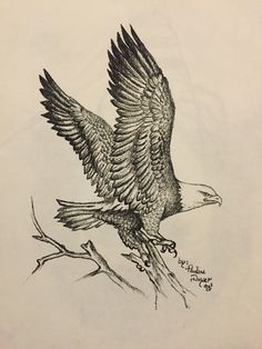 Sketchbook Drawings, Bird Drawings, Animal Drawings, Cool Drawings, Pencil Drawings, Eagle Sketch, Bird Sketch, Eagle Drawing, Wings Drawing
