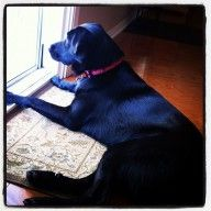 Sasha Got Swag - Dog of the Week Candidate - PuppyDogSwag.com   Repin to Vote!