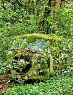 Aged with beauty - green covered abandoned old VW Bus Abandoned Buildings, Abandoned Houses, Abandoned Places, Abandoned Vehicles, Vw Caravan, Vw Camper, Volkswagen Bus, Caravan Paint, Van Vw