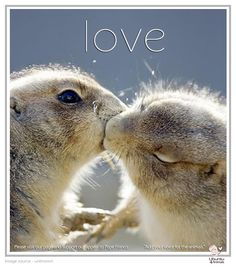 32 Best Loving Animal Wisdom Images Pictures