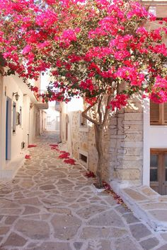 Bougainvillier, Naxos Island, Greece We are want to say thanks if you like to sh. Beautiful World, Beautiful Gardens, Beautiful Flowers, Wonderful Places, Beautiful Places, Beautiful Pictures, Illustration Blume, Belle Photo, Flower Decorations