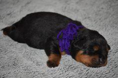 Purple Female Cutie Pie Purple Princess