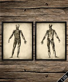 vintage muscle anatomy muscular system human body anatomy poster anatomy decor medical poster muscles vintage anatomic anatomy home office