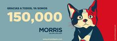 Morris the Cat for Mayor