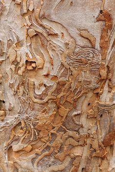 Art in Nature - Eucalyptus Bark - natural texture, colour and surface pattern inspiration for design Natural Forms, Natural Texture, Patterns In Nature, Textures Patterns, Nature Pattern, Art Maori, Foto Macro, Design Floral, Design Art