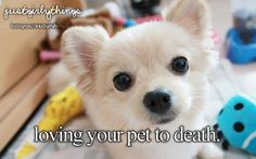 loving your pet to death #justgirlythings