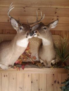 I want this deer mount in my future house! Maybe in weddin!!! But def in our bedroom!!!! <---loooool WHAT ???