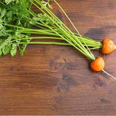5 gemakkelijkste groenten om te zaaien
