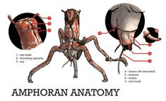 Amphoran Anatomy by povorot.deviantart.com on @DeviantArt (Comment by original pinner.)