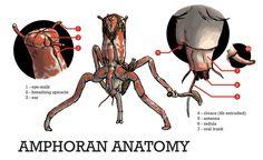 Amphoran Anatomy by povorot.deviantart.com on @DeviantArt