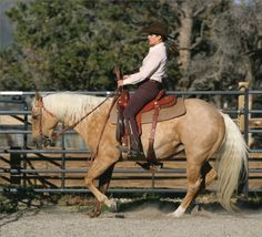 Stop with Your Seat   America's Top Trail-Riding and Equestrian-Travel Magazine   The Trail Rider