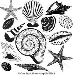 EPS Vector of Shells collection Seashells vector set starfish for ...